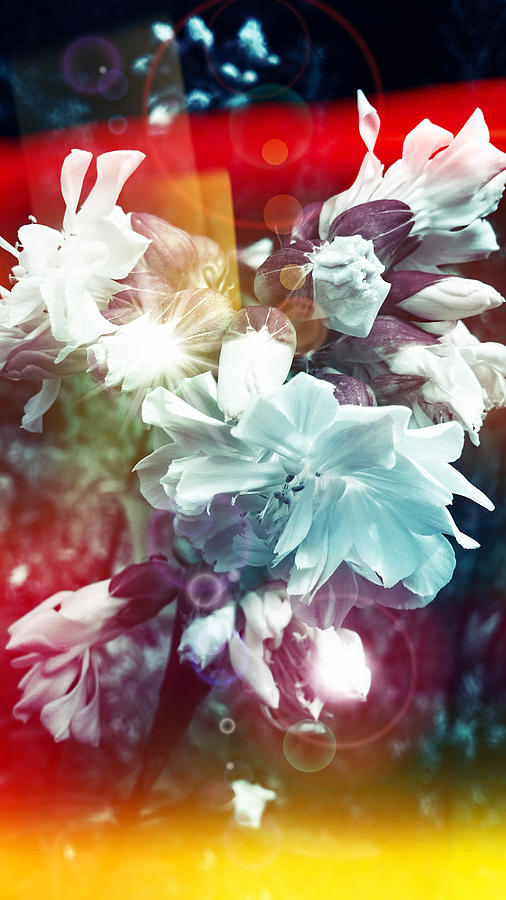 Flowers Digital Art - Faded Dreams by Mikko Tyllinen