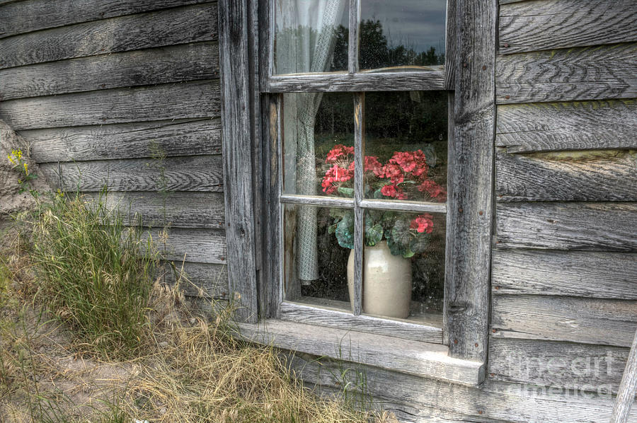 Faded in the Window by Michele Richter