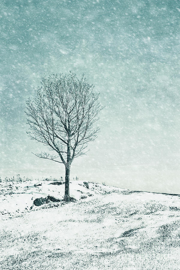 Faded Into Winter Photograph