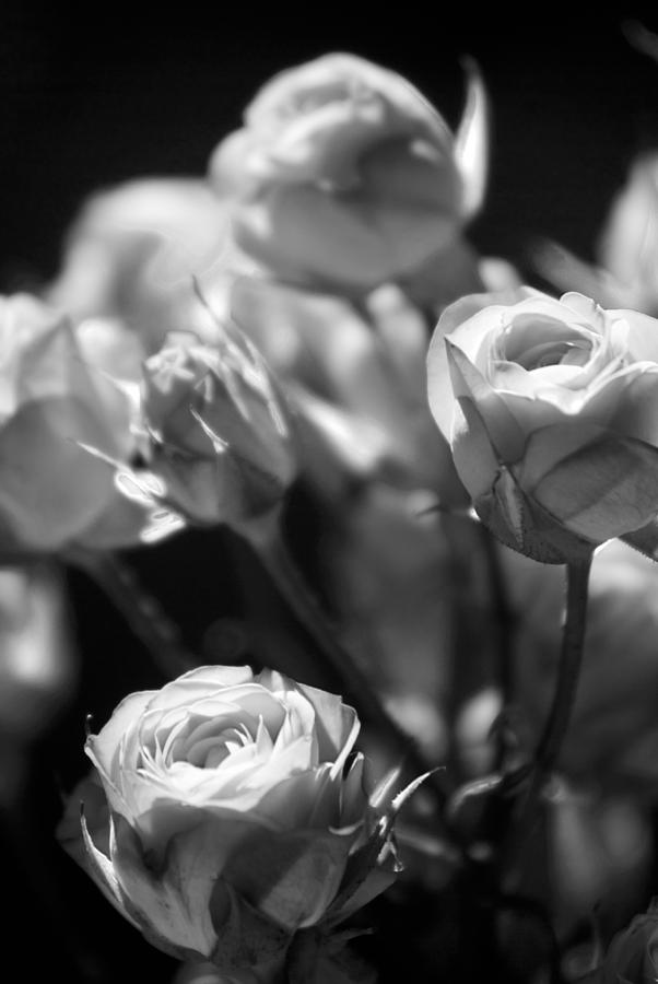 Faded Rose by Beverly Stapleton