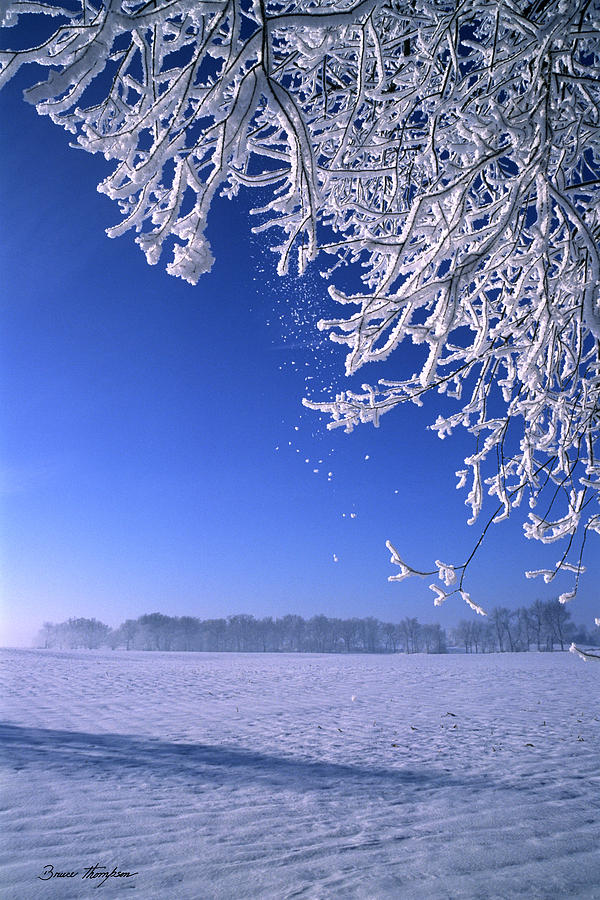 Frost Photograph - Fairy Dust by Bruce Thompson