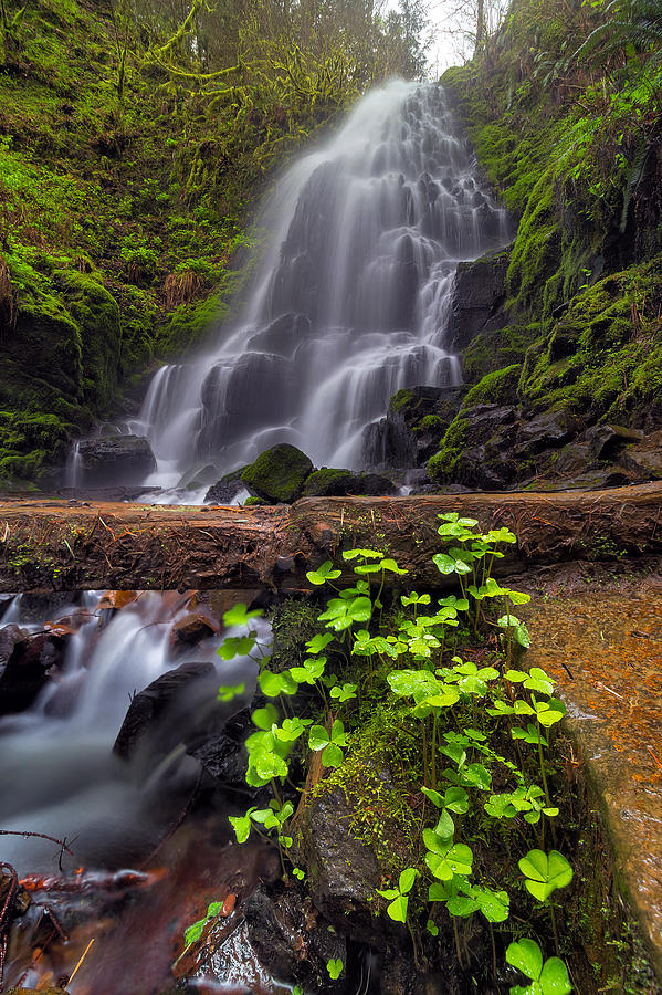 Fairy Falls Photograph - Fairy Falls In Spring by David Gn