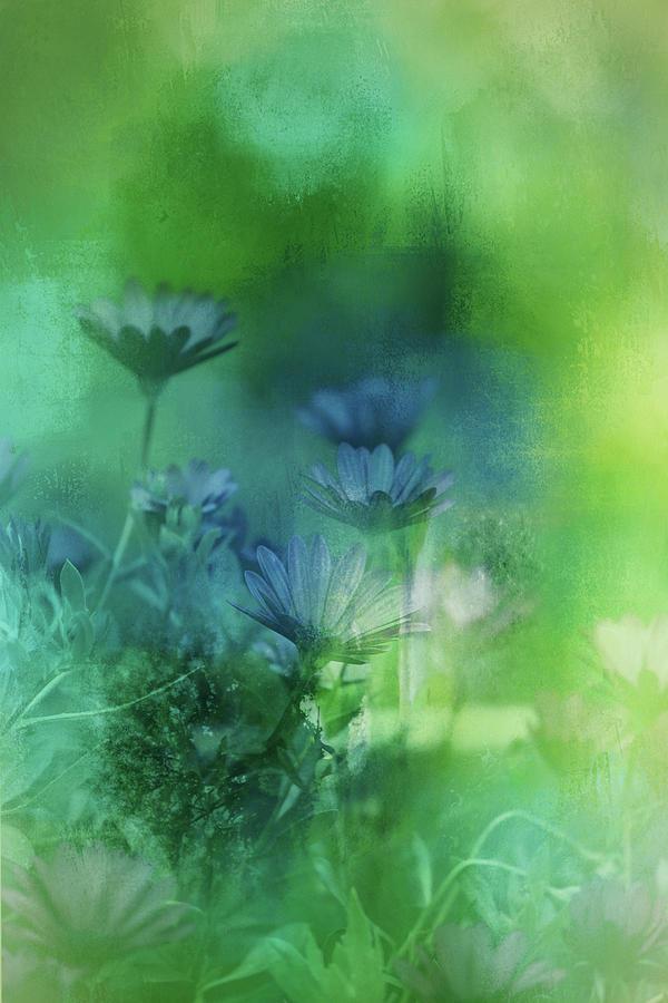 Fairy Garden Photograph
