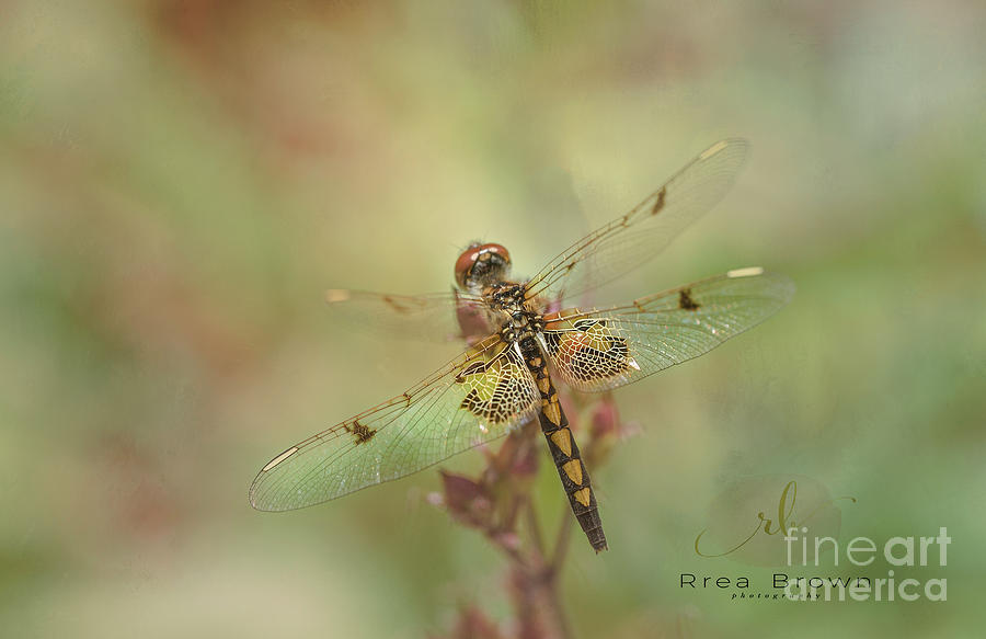 Fairy Wings Photograph by Rrea Brown