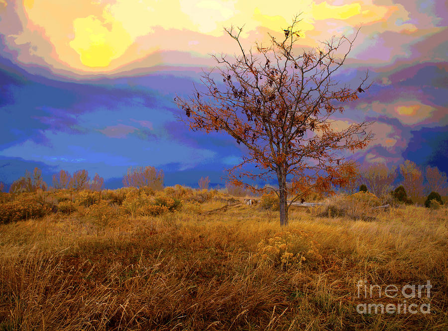 Autumn Photograph - Fairytale Tree by Barbara Schultheis