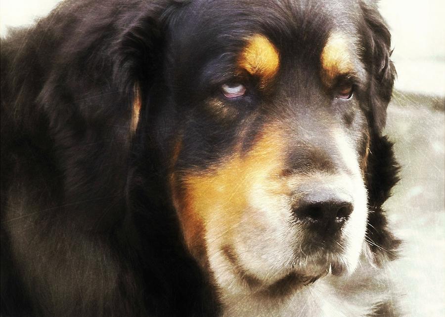 Dog Photograph - Faithful by JAMART Photography