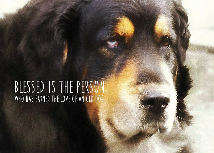 Dog Photograph - Faithful Quote by JAMART Photography