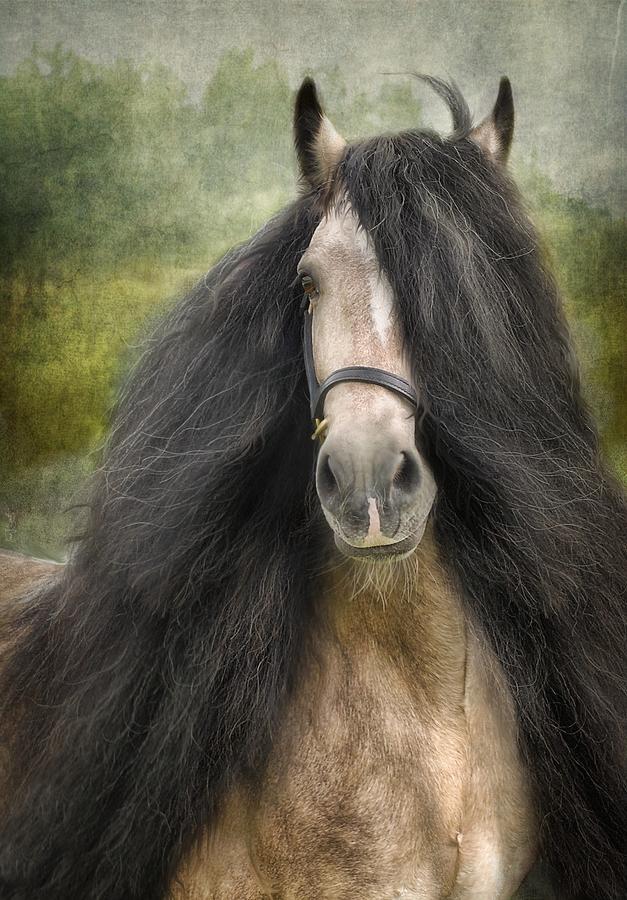 Horses Artwork Photograph - Falcon by Fran J Scott