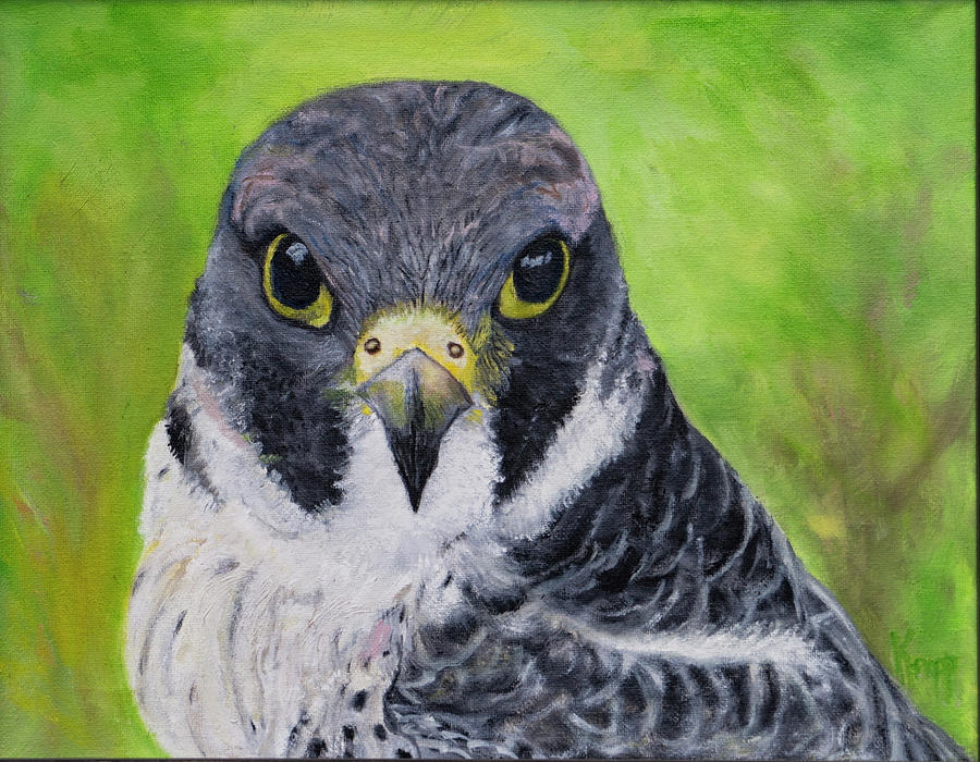 Falcon by Kathy Knopp