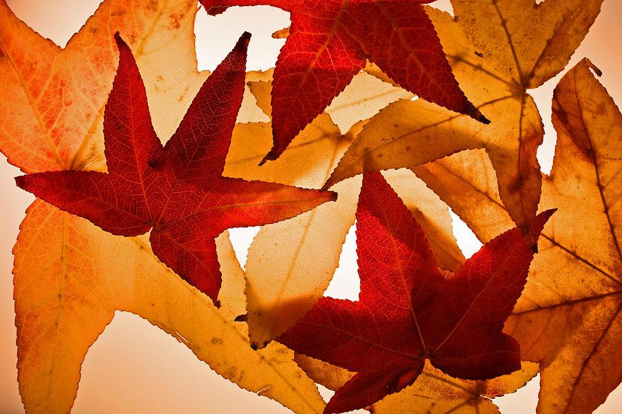 Fall Photograph - Fall 002 by Bobby Villapando