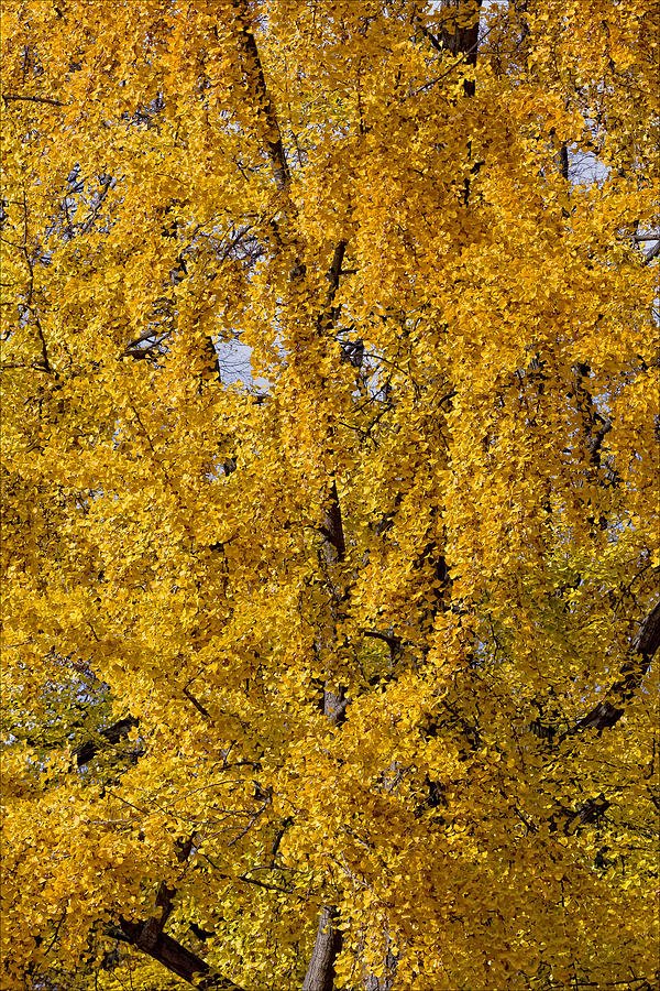 Fall 2010 30 Photograph