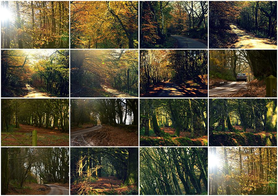 Fall Photograph - Fall - A Montage by Andy Thompson