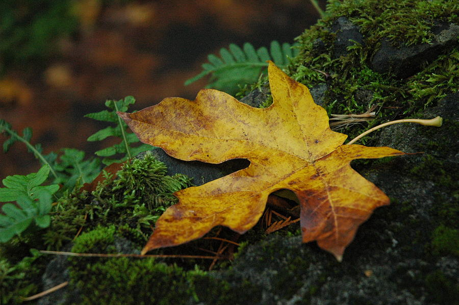 Foliage Photograph - Fall Alone by Lori Mellen-Pagliaro