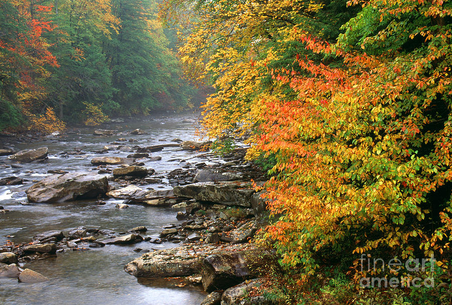 Cranberry River Photograph - Fall Along The Cranberry River by Thomas R Fletcher