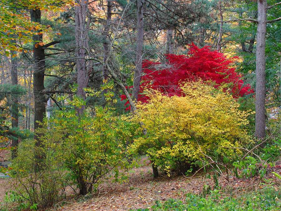 Landscape Photograph - Fall At The Arboretum by Juergen Roth