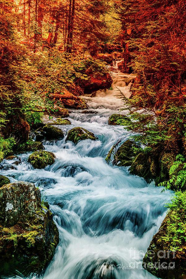Fall at Virgin Creek Photograph by Heather Hubbard