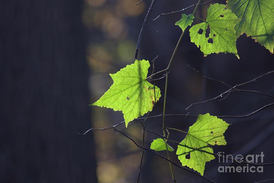 Fall Photograph - Fall Bokeh by Sarah Gallagher
