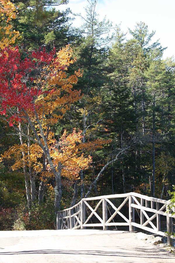 Fall Color Photograph - Fall Bridge by Sue Mayor