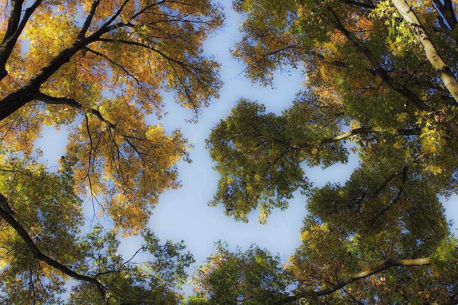 Fall Photograph - Fall Canopy In Virginia by Teresa Mucha