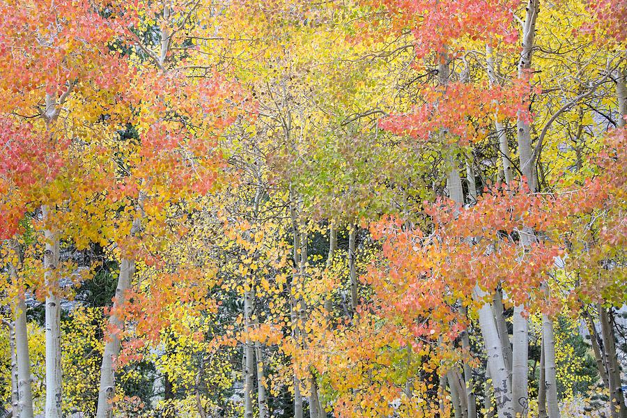 Fall Color Photograph - Fall Color At North Lake by Velda Ruddock