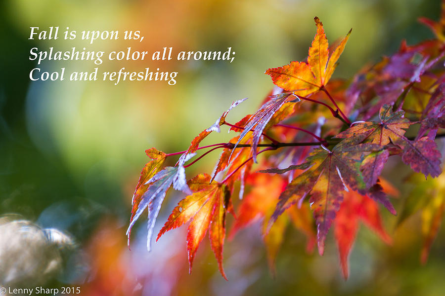 Fall Photograph - Fall Color - Haiku by Leonard Sharp