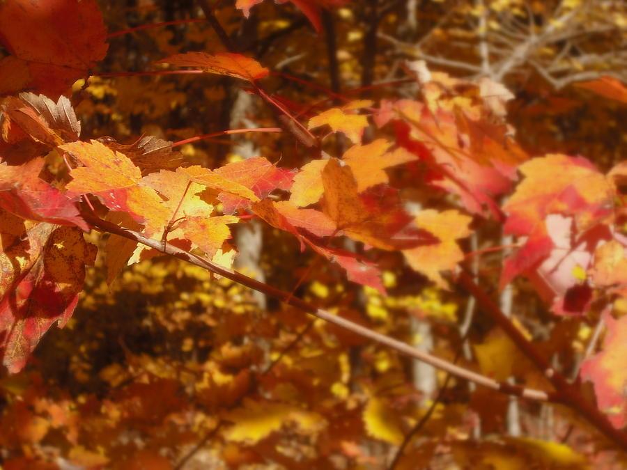 Orange Photograph - Fall Color by John Julio