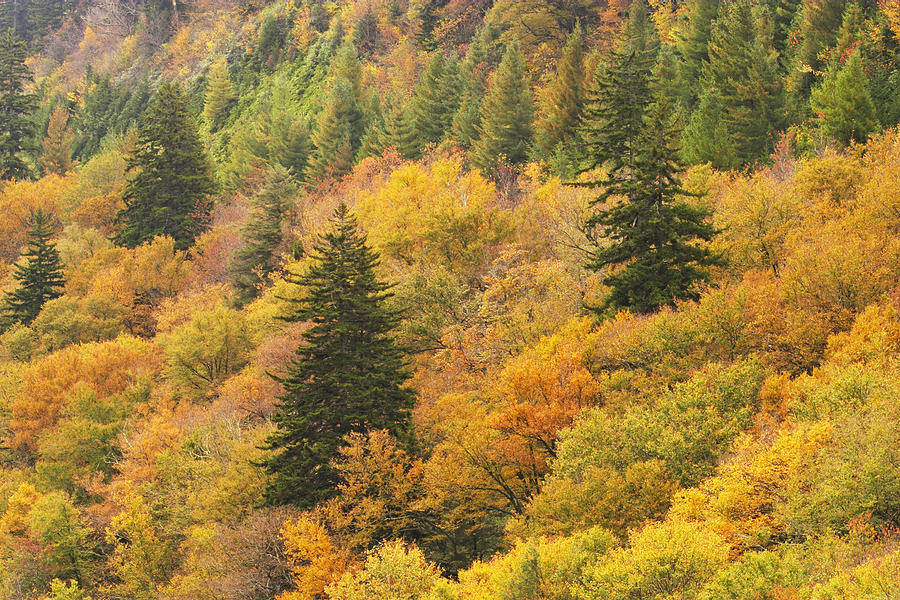Fall Color Newfound Gap  by Harold Stinnette