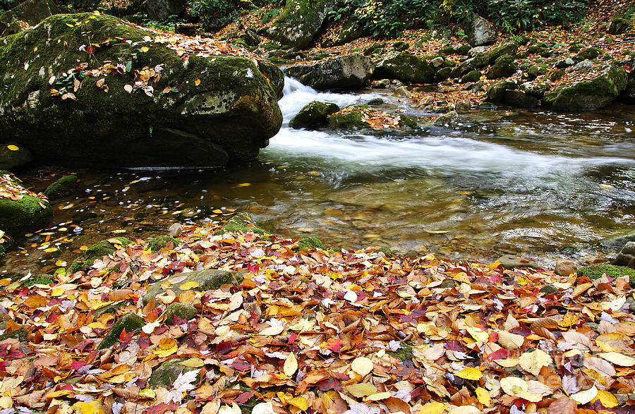 Fall Color Photograph - Fall Color Rushing Stream by Thomas R Fletcher