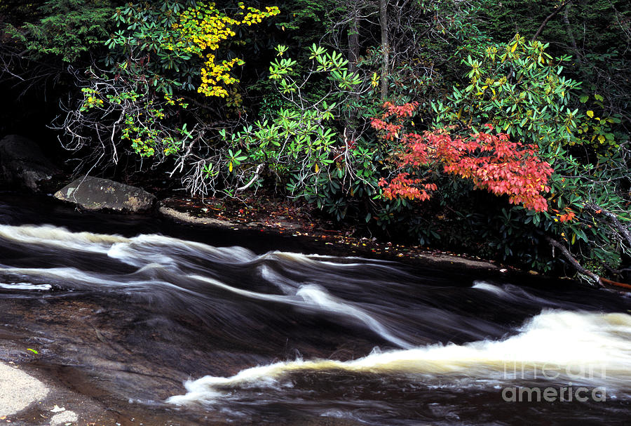 Muddy Creek Photograph - Fall Color Swallow Falls State Park by Thomas R Fletcher