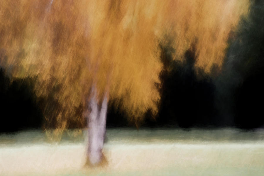Tree Photograph - Fall Color with Painterly Effect by Carol Leigh