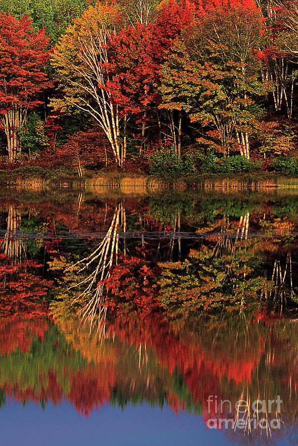 fall colored trees thornton lake upper peninsula michigan by Dave Welling