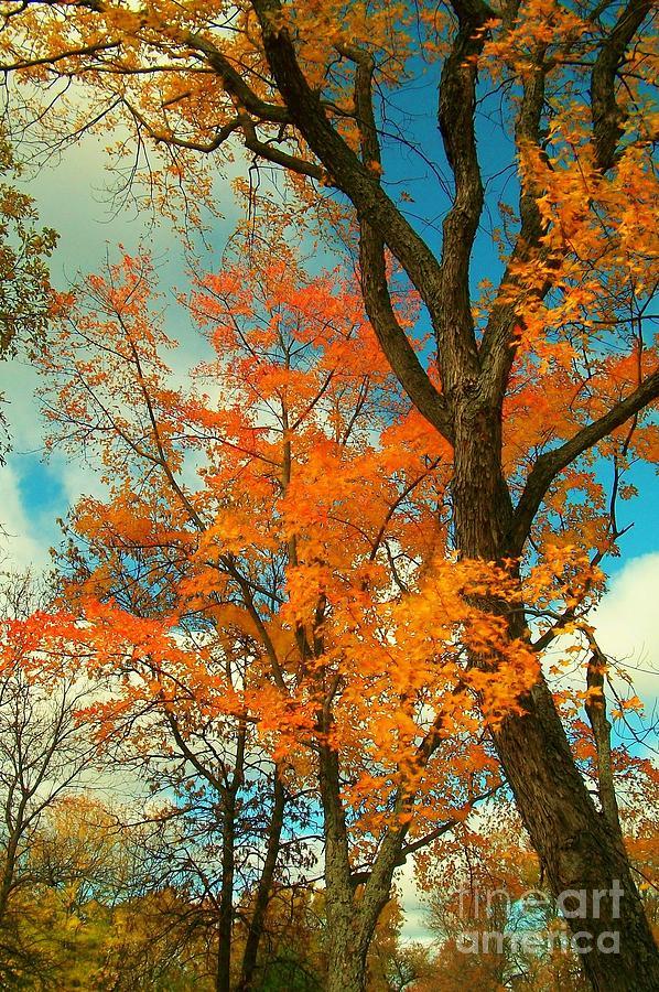 Fall Photograph - Fall Colors 2 by Marjorie Imbeau