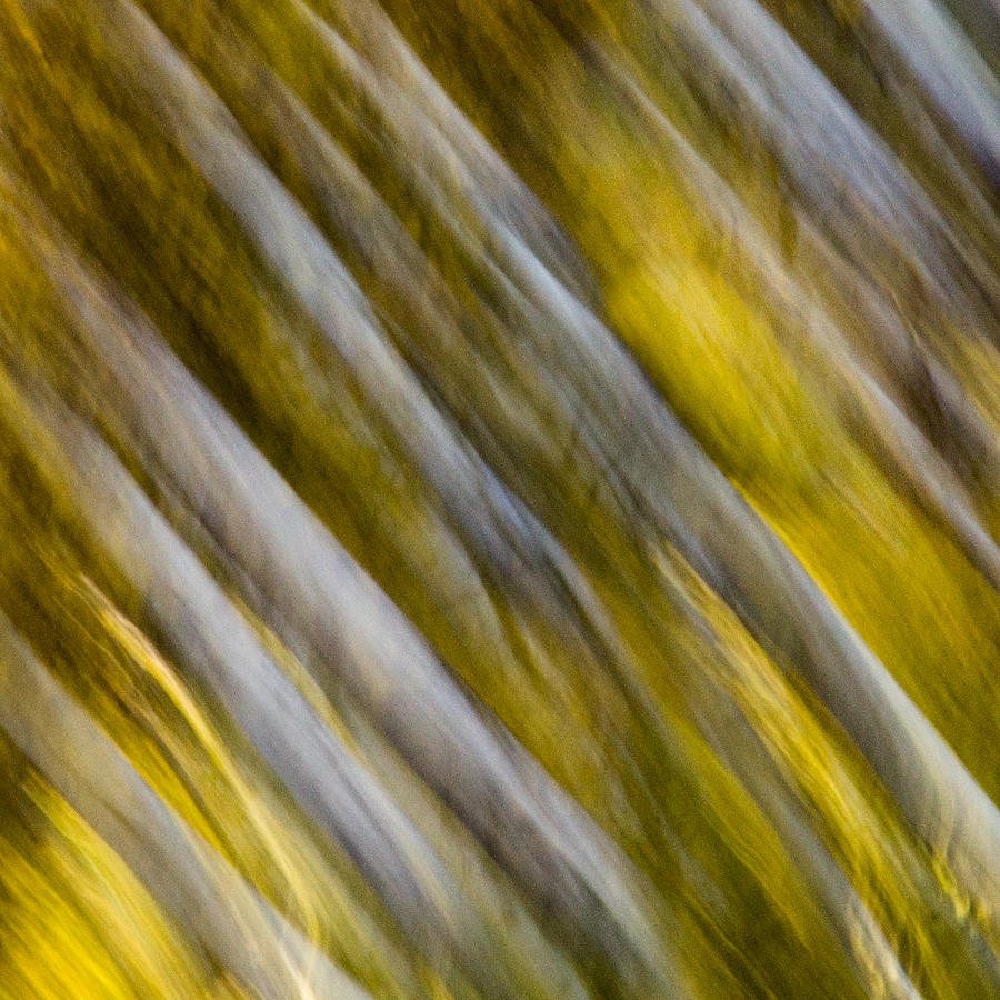 Fall Colors Abstract Photograph
