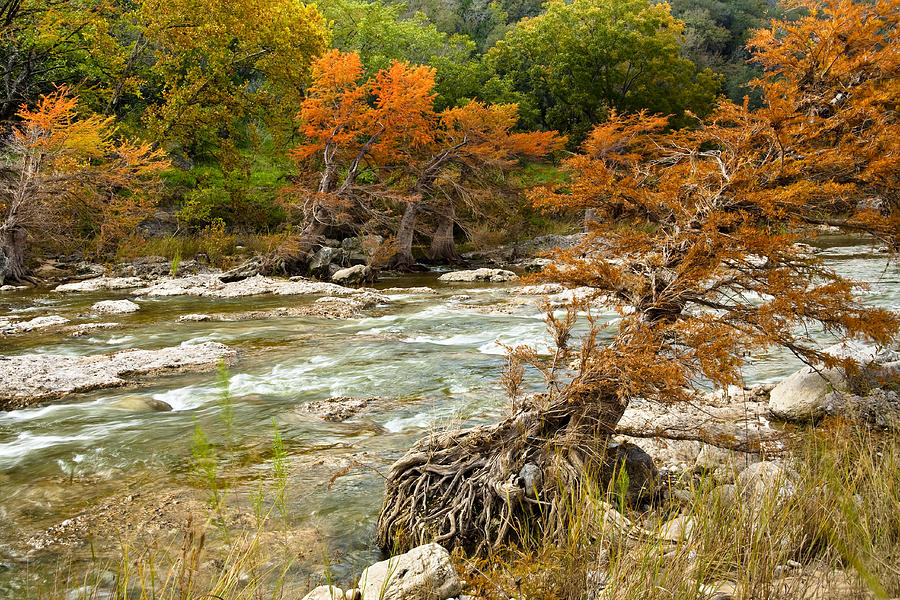Daytime Photograph - Fall Colors Along The Pedernales River by Mark Weaver
