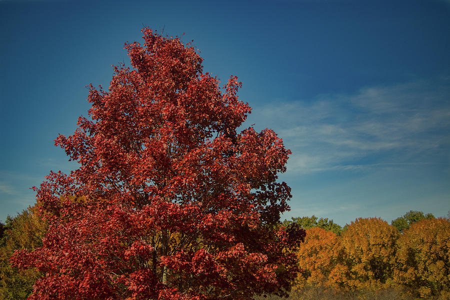 Asheville Photograph - Fall Colors, Ashville, Nc by Richard Goldman