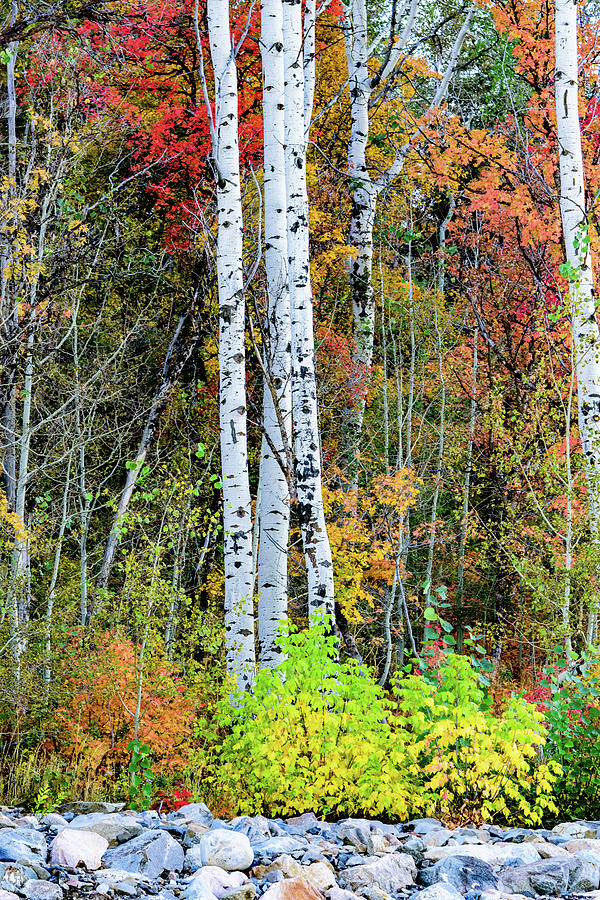 Fall colors by Bryan Carter