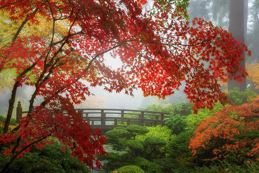 Fall Photograph - Fall Colors By The Moon Bridge by David Gn