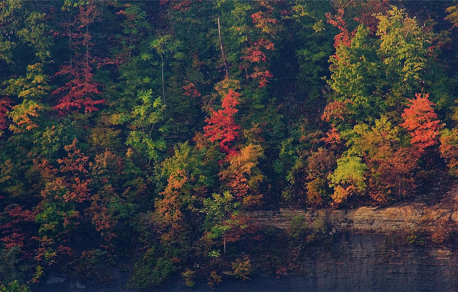Fall Colors by Christopher Meade