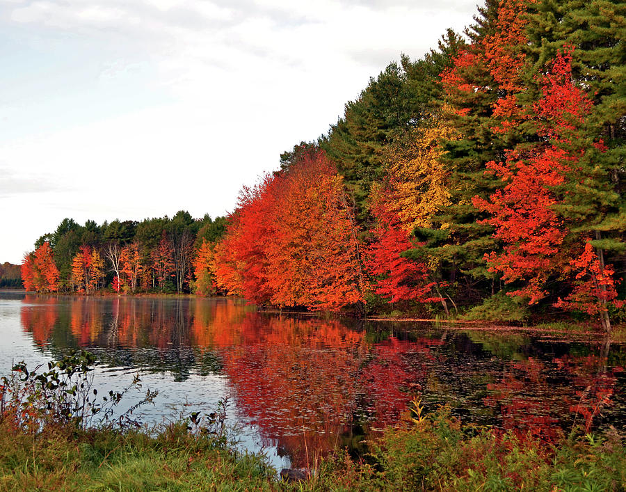 Fall colors in Madbury NH by Nancy Landry
