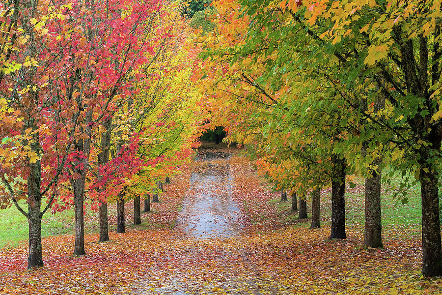Fall Colors Photograph - Fall Colors In Oregon by David Gn