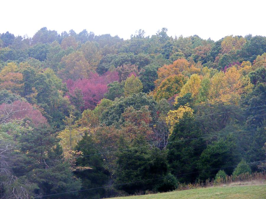 Fall Photograph - Fall Colors In Rockbridge County by Eddie Armstrong