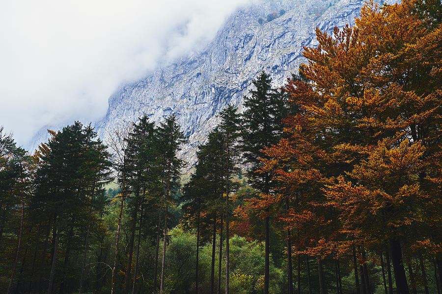 Fall Colors In Salzburg Photograph