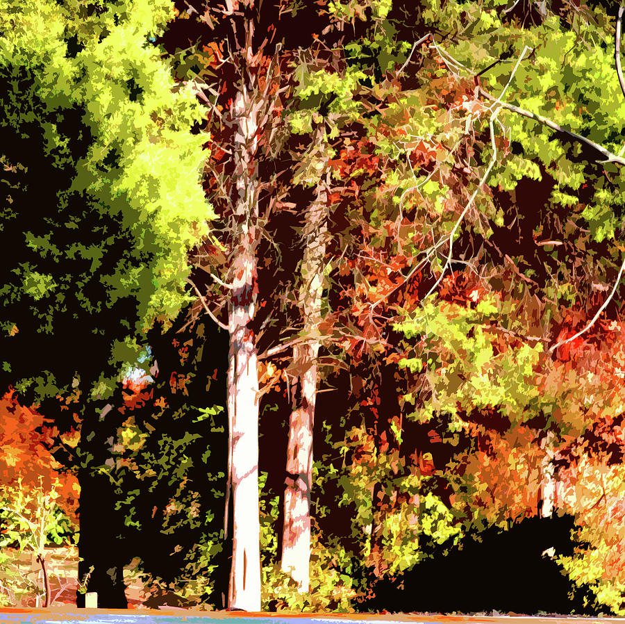 Fall Photograph - Fall Colors in Sunlight by John Lautermilch