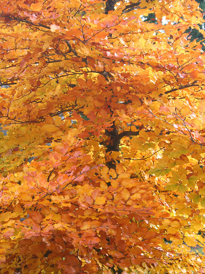 Fall Photograph - Fall Colors by Mary Gaines