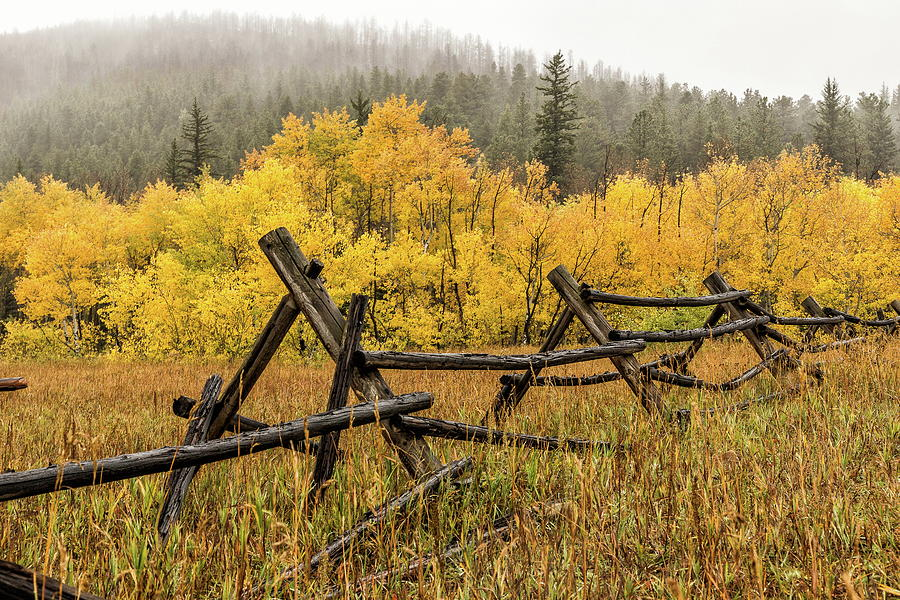 Fall Colors On Colorados Peak To Peak Highway Photograph