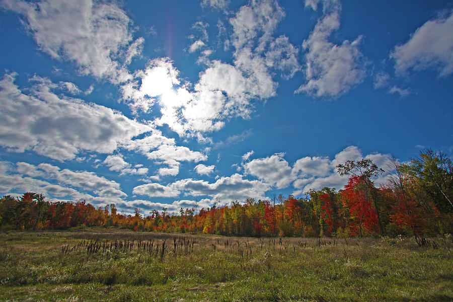 Fall Photograph - Fall Colors by Ty Helbach