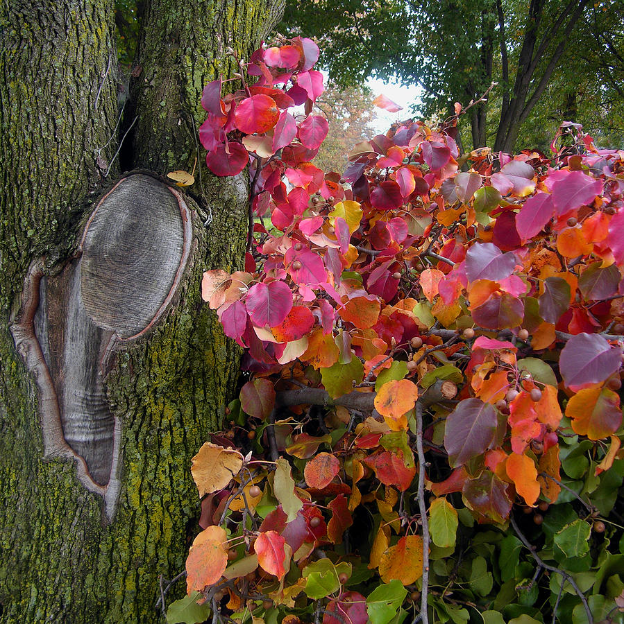 Fall Trees Photograph - Fall Composition by John Lautermilch