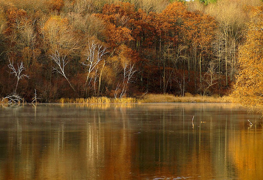Lake Photograph - Fall Cove by Thomas Young