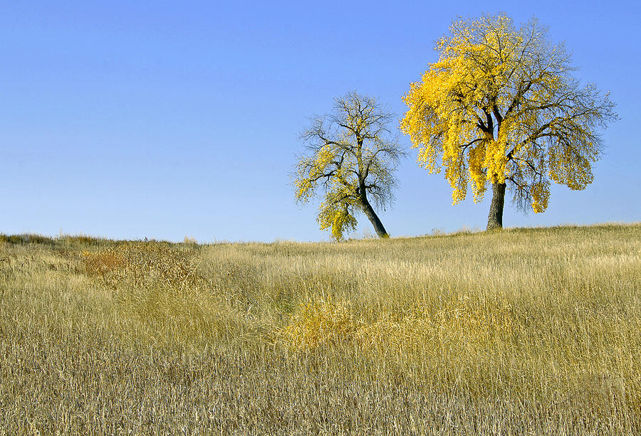 Fall Days In Fort Collins Co Photograph by James Steele