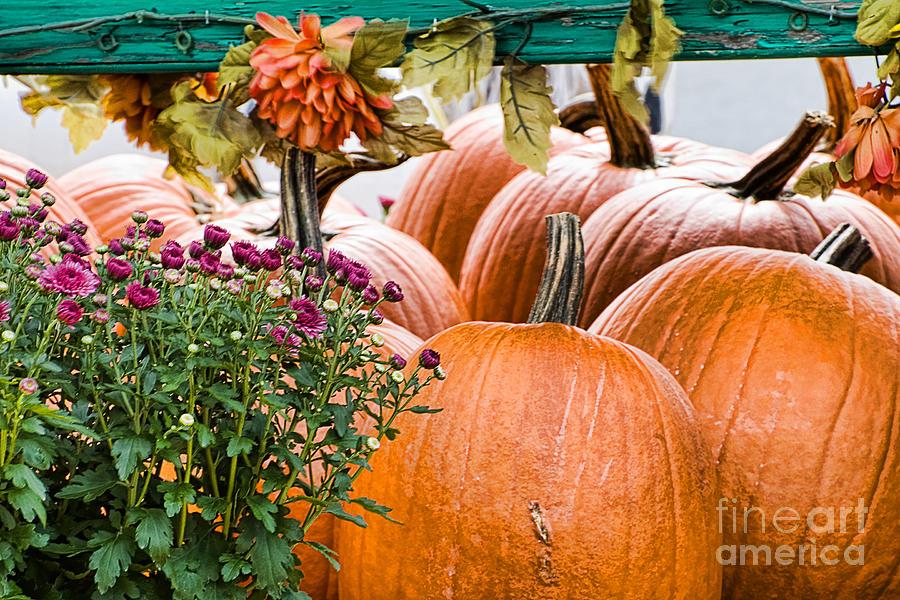 Pumpkins Photograph - Fall Display by Edward Sobuta